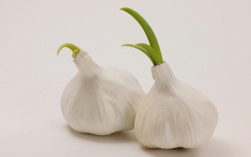 Studi sui benefici dell'aglio germogliato