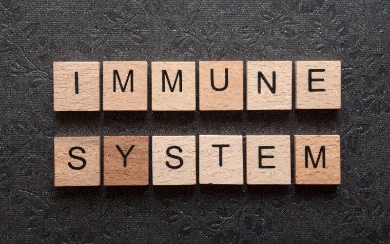 Immunostimolante