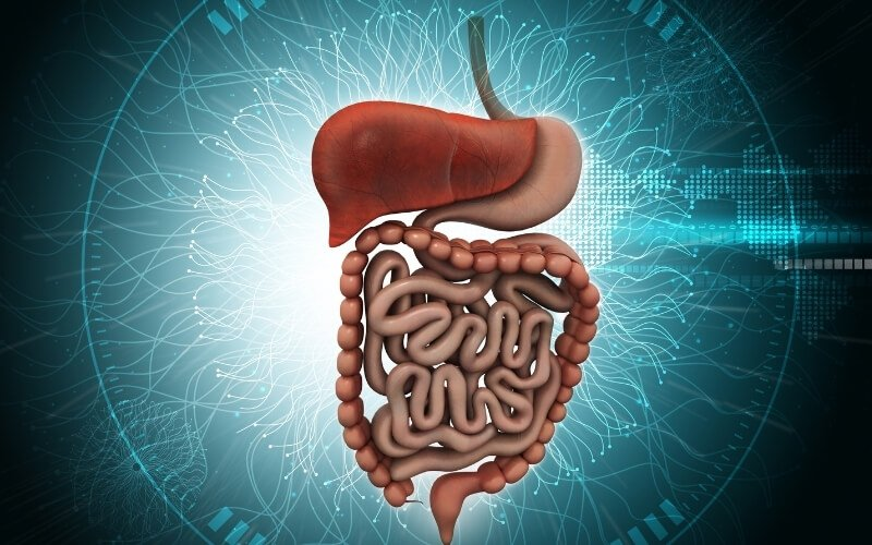 digestione