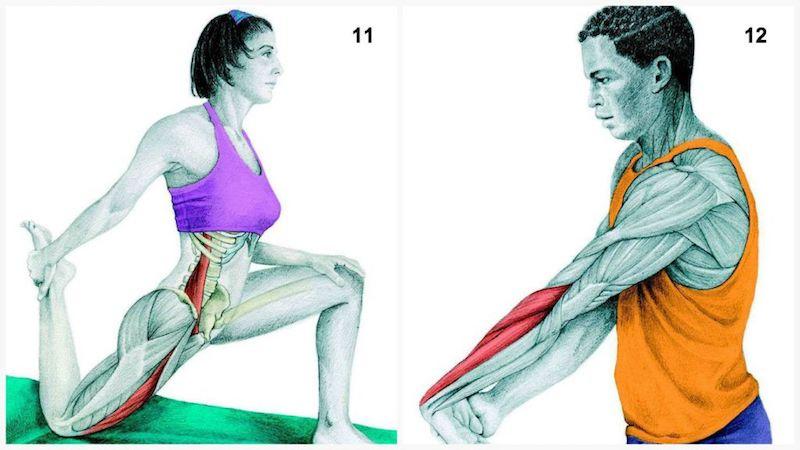 allungamento anca e avambraccio