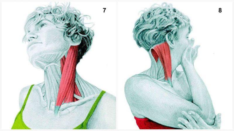 stretching collo e flessione laterale