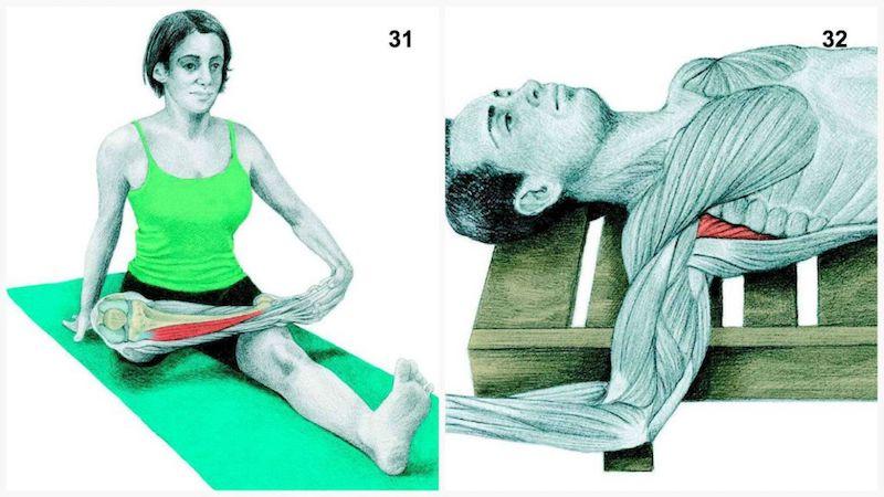 stretching tibia